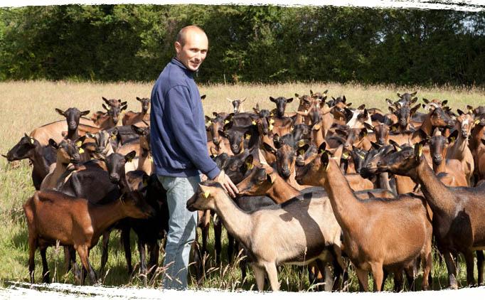 Nicolas producteur bio - Chèvres