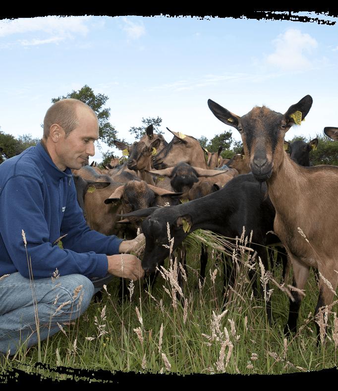 Bien être animal éleveur et chèvres