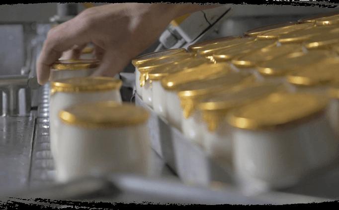 Conditionnement des yaourts bio en verre