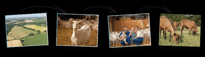 Lait de chèvre - Producteurs locaux