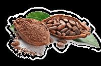 Cacao-bio