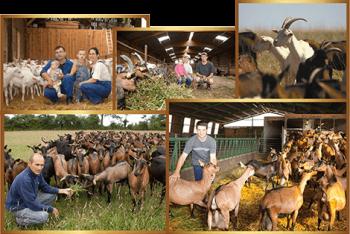 producteurs partenaires chèvre